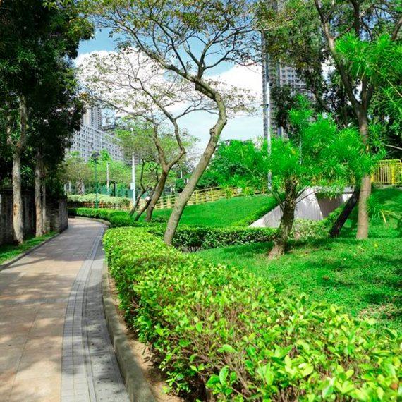 Las Mejores Fotos De Jardines En Pinterest: Jardines Infiltrantes En La Ciudad De México